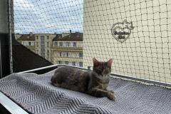 chaterie-sur-fenetre-07