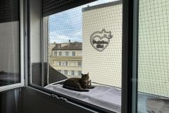 chaterie-sur-fenetre-08