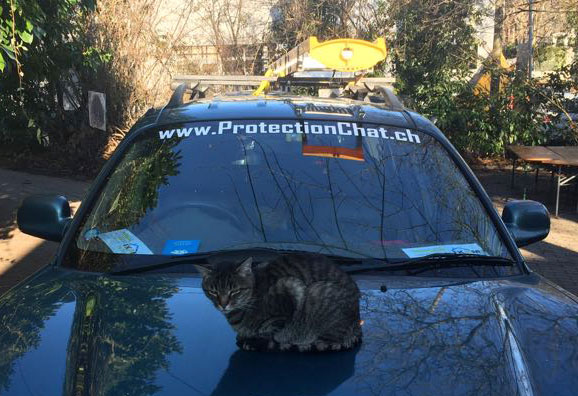 Minouche recommande ProtectionChat.ch