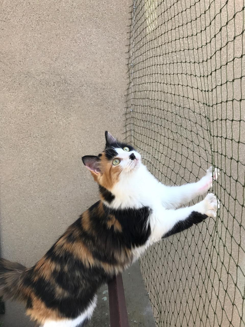 Filet de protection pour chats résistant