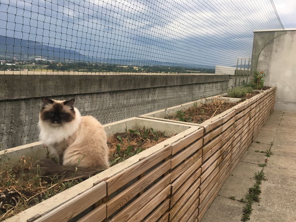 Protection-Chat_securisation_de_terrasse_