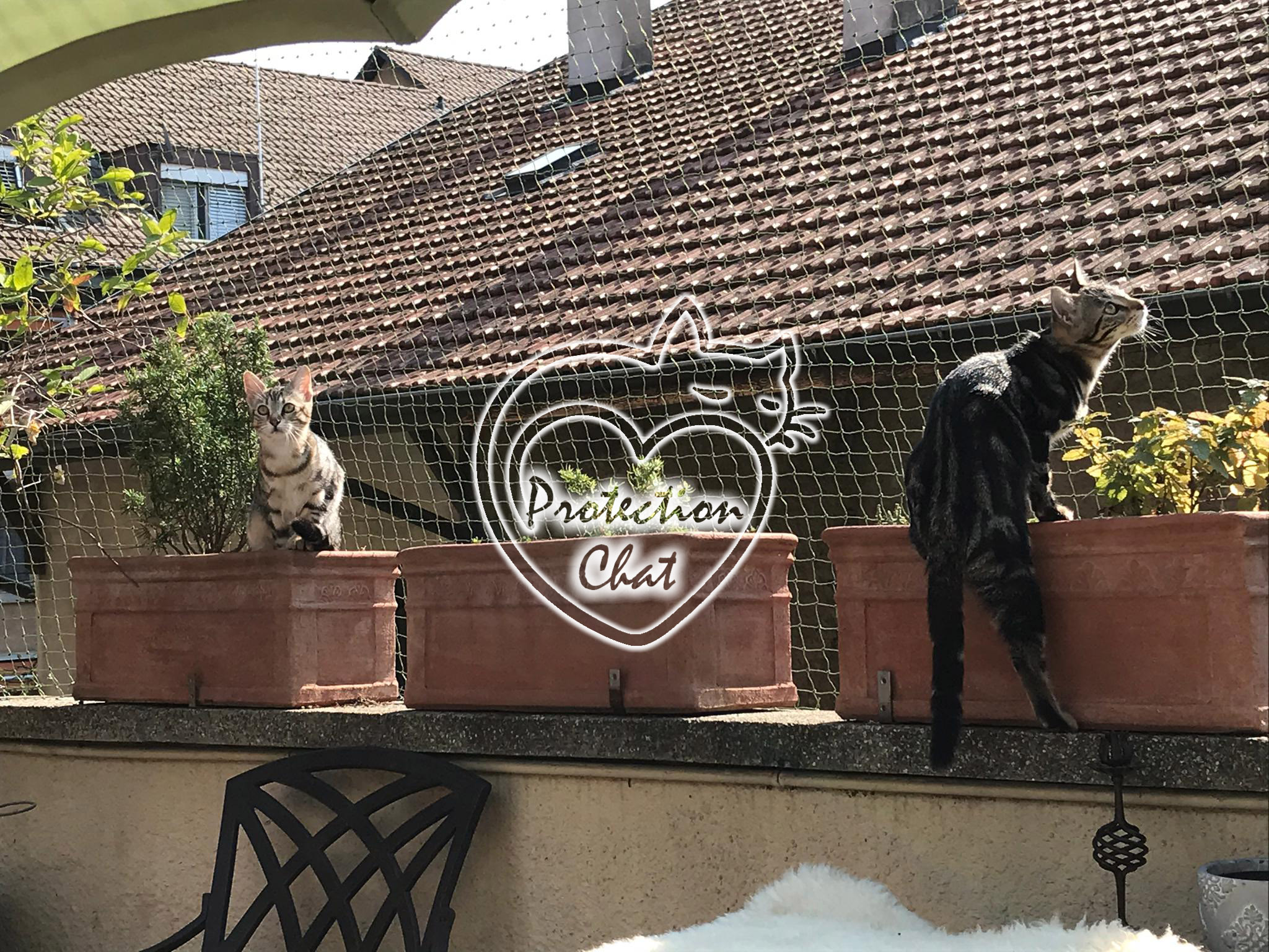 Terrasse-Securisee-ProtectionChat.ch-03