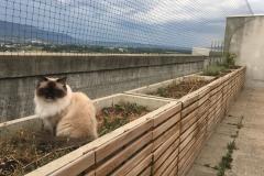 Protection-Chat_securisation_de_terrasse_