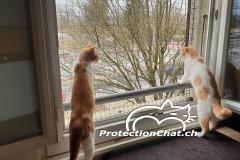 Shop.protectionchat.ch-01